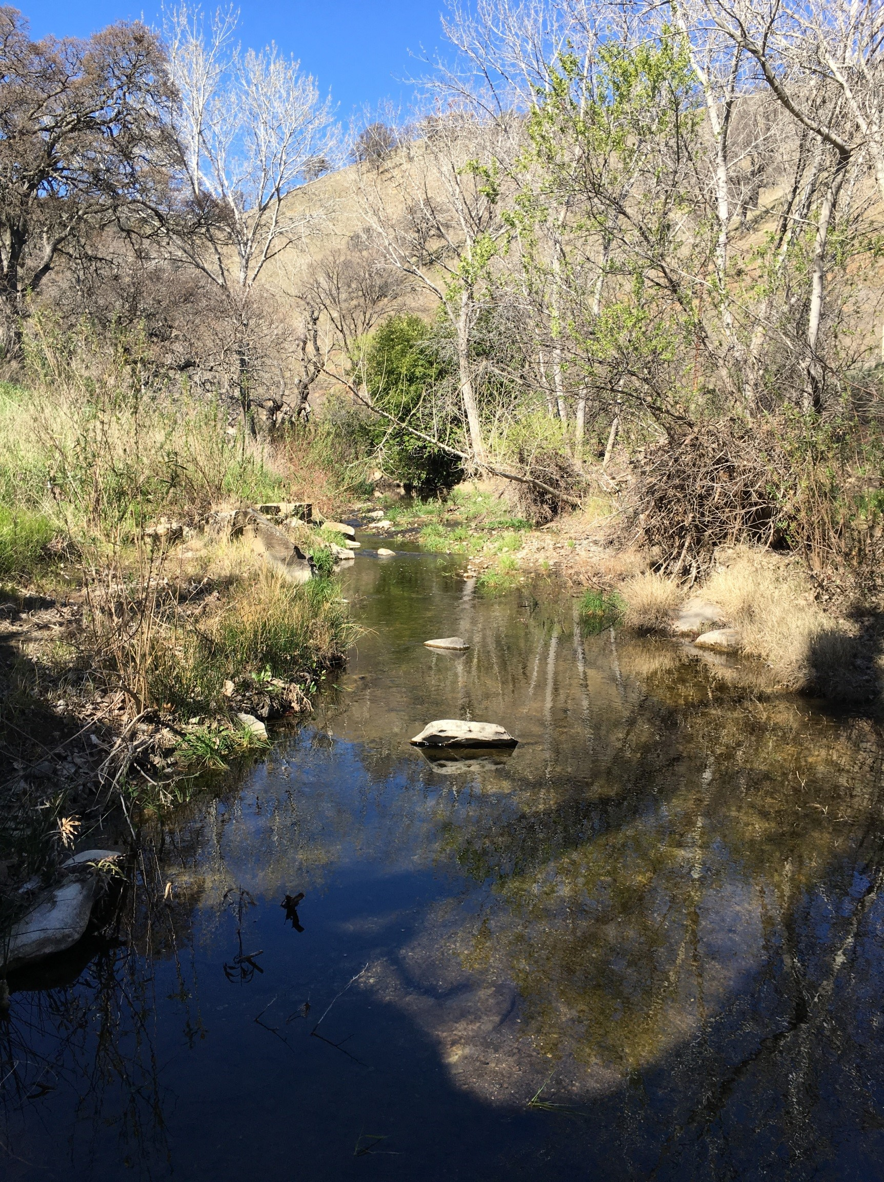Marsh Creek site monitored by The Watershed Project